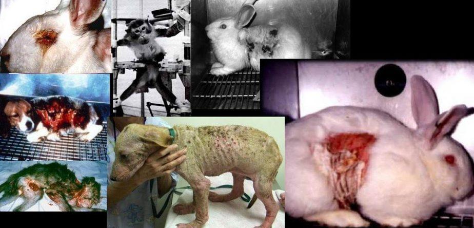 animal drug testing